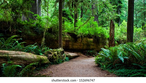 Large fallen redwood tree with plant life growing on it