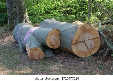Large fallen trunks in Sonsbeek Park