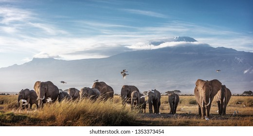 Large family herd of African elephants walking in front of Mount Kilimanjaro in Amboseli, Kenya Africa