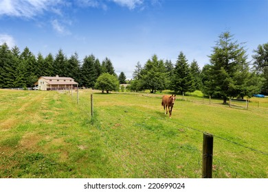 Large farm field with horse barn and walking horse. Olympia, Washington state