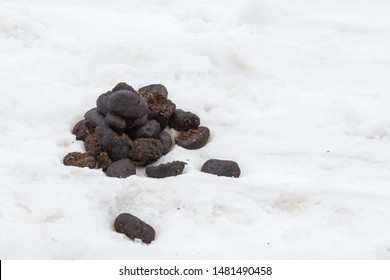 Large feces on white snow close-up.