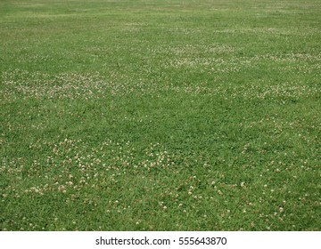 Large field of green grass in countryside
