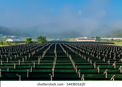 Large field of Korean ginseng in mountain valley industrial farming community with early morning fog obscuring mountains and blue sky in background.