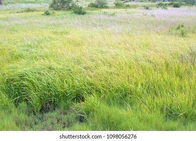 Large field of long green grass blowing in the wind.
