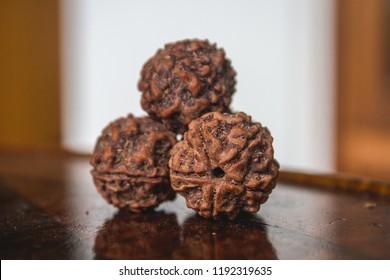 Large Five Face mukhi Rudraksh Seed Macro