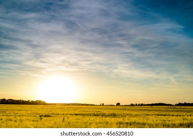 Large flat field of ripening wheat at sunset with the fiery orb of the sun low in the sky backlighting the crop in golden light