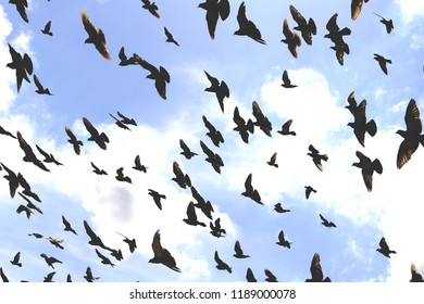 large flock of birds against the sky, toned