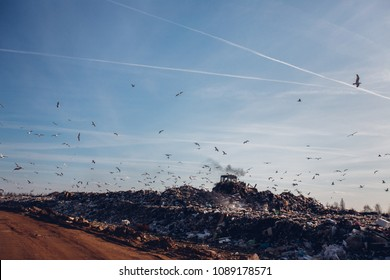 A large flock of seagulls flies over huge piles of garbage at a landfill site