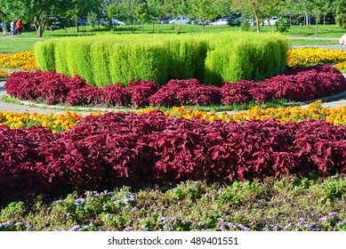 A Large Flowerbed With A Red Coleus