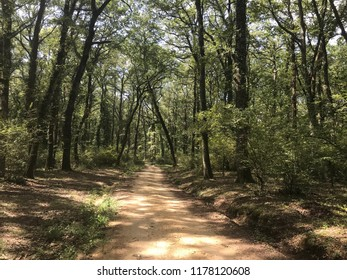A large forest in the province of Rome, where the dominant species is the Turkey oak, followed by English oaks, wild maples, medlars, hornbeams, chestnut and birch trees.