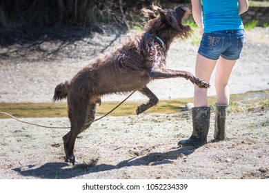 Large, furry, brown dog leaping up to playfully bite teen on the arm while they are running together on the dry beach in the spring.