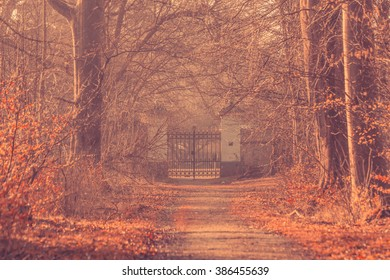 Large gate in a misty forest in the morning