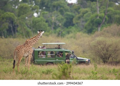 Large giraffe watching a group of photographers in a vehicle on safari