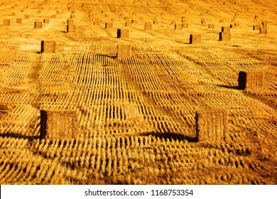 Large golden haybales hay bales in field with rows harvest harvested from farming
