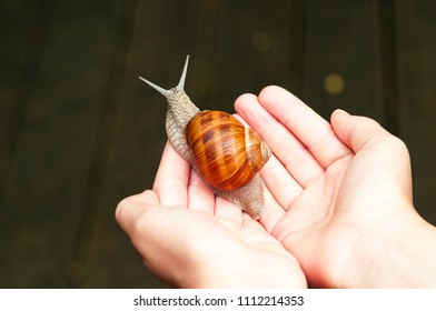 Large grape snail strip on the small hand of a child. Selective focus.