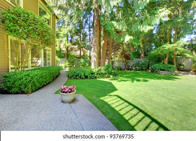 Large green back yard with pine trees.