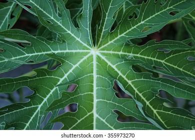 Large Green Fern Leaves