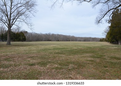large green grass lawn or yard with trees