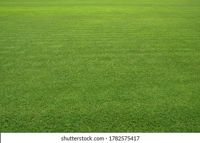 Large green lawn. Very Clean Lawn, Grass texture background. Grass surface for product display arrangement. Green Background, Golf Course, Vast grassland, Meadow,  courtyard, Football field.