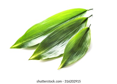 large green leaves isolated white back ground