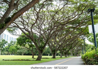 large green tree in the East Coast Park, Singapore