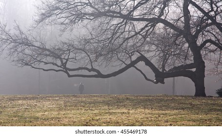large green tree in the park is on the horizon in the fog, a man stands under it, cold, steaming