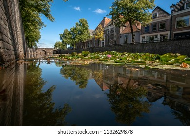 Large green water lilies in purple, pink, white colors and yellow stamens. Photo made with a frog perspective over the water surface. The quay walls of the dutch city Kampen,