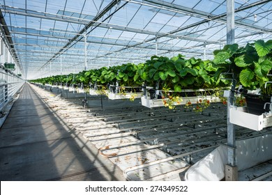 Horticulture Images, Stock Photos & Vectors | Shutterstock