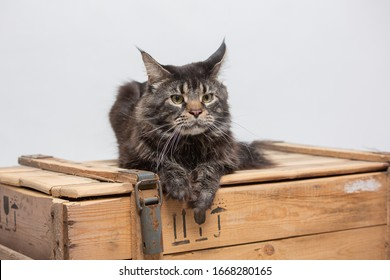 a large grey tabby cat is lying on a box - Shutterstock ID 1668280165