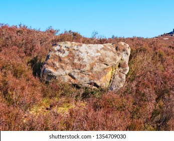 Large gritstone rock surrounded by  heather and bracken camouflaged by lichen and moss