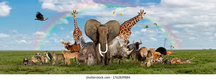 Große Gruppe afrikanischer Tier- und Pflanzenarten, in einer Reihe, einzeln