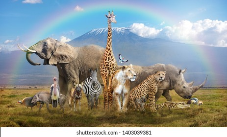 Large group of African wildlife animals in a magical bream scene with snow-capped Mt Kilimanjaro in background and rainbow overhead