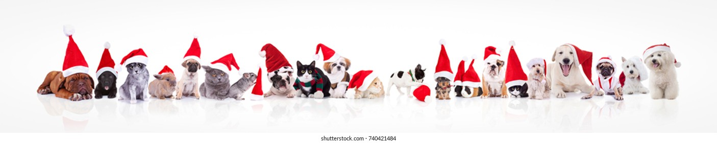 large group of animals waring santa claus hat on white background; dogs, cats, chinchilla, rabbits, guinea pigs