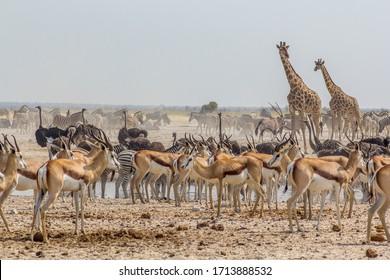Large group of animals at a waterhole near Ozonjuitji m'Bari, in Etosha National Park, Namibia