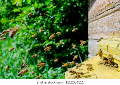 A large group of bees flies to the hive. The army of bees is circling near the area of the hive.