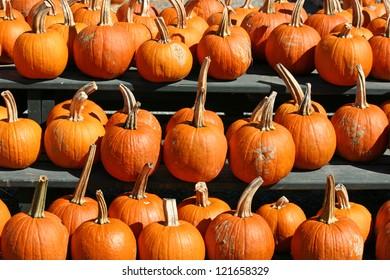 A large group of bright orange pumpkins