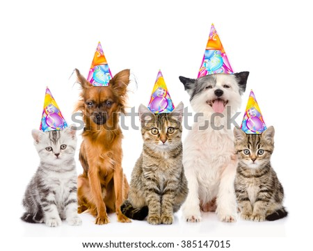 Large Group Cats And Dogs In Birthday Hats Isolated On White Background