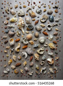 Large group of conchs and shells over a muted wooden background