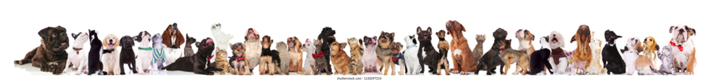 large group of curious dog and cats looking up while standing, lying and sitting on white background