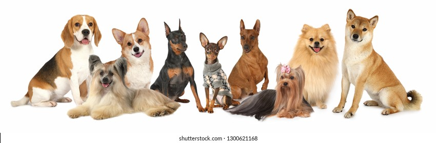 A large group of dogs of different breeds that are various sizes