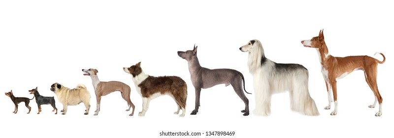 A large group of dogs of different breeds and various sizes standing on a white background