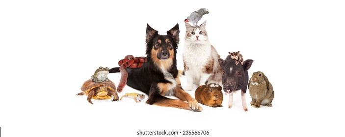 A large group of domestic household pets including a dog, cat, bird, guinea pig, pig, sugar glider, bunny, lizard, snake, turtle and frog. Sized to fit a social media timeline cover placeholder.