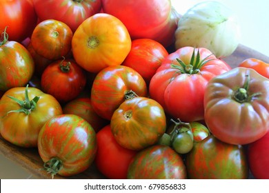 Large group of healthy red and orange and striped homegrown heirloom tomatoes with wooden table background