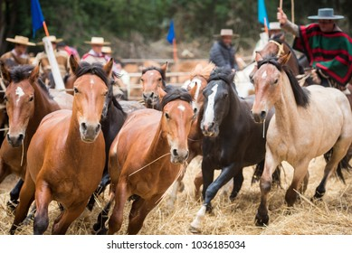 Large group of horses running together