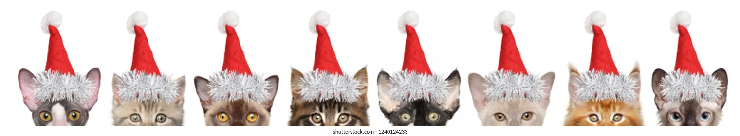 Large group of kitten half-face in Santa red hats, front view. isolated on white background. Christmas animals theme