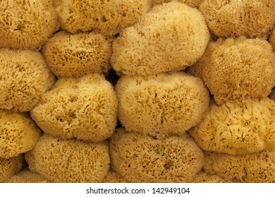 large group of natural sponges