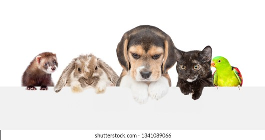 Large group of pets  over empty white banner. isolated on white background. Empty space for text