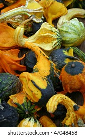 A large group of pretty colorful gourds