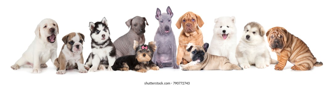 A large group of puppy dogs of different breeds that and various sizes