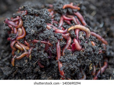 a large group of red worms on earth